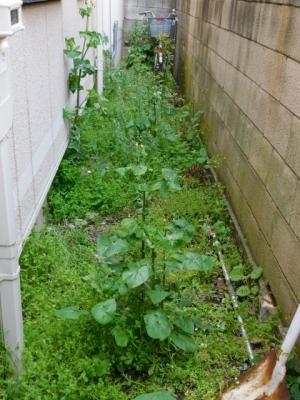 Weeding1